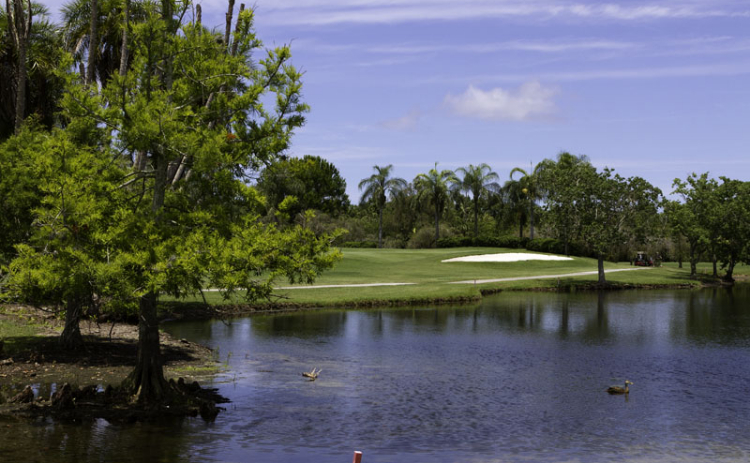 Closeup image of a pond on the course at Manatee Golf Course